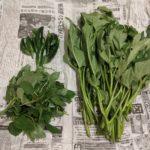 脱プラ野菜の包装