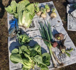 脱プラ収穫野菜