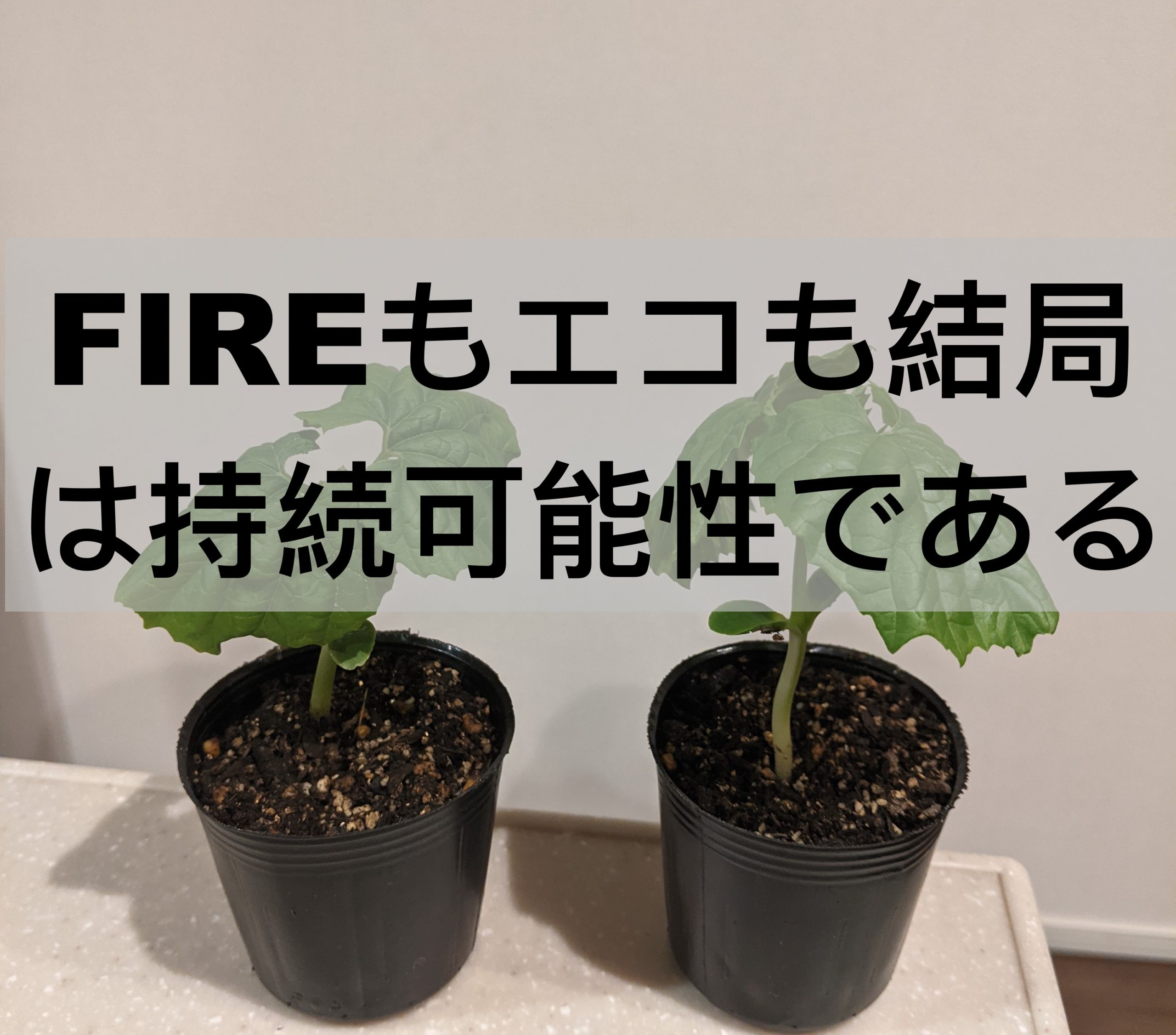 FIRE持続可能性